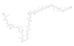 Adrenomedullin (1-52), human
