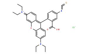 异硫氰酸罗丹明B/Rhodamine B Isothiocyanate