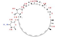 两性霉素B来源于链霉菌属