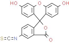 异硫氰酸荧光素酯