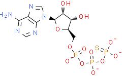 ATPγS tetralithium salt