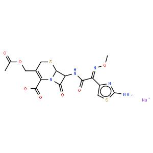 頭孢噻肟鈉