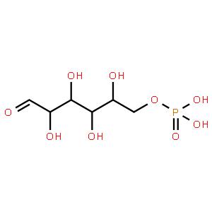 葡萄糖-6-磷酸脱氢酶 来源于肠系膜明串珠菌(高活性,悬浮液)