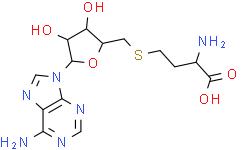 S-(5'-腺苷)-L-高半胱氨酸