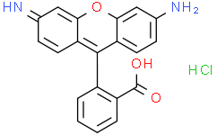 Rhodamine 110 (chloride)