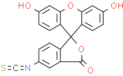 FITC, Fluorescein isothiocyanate
